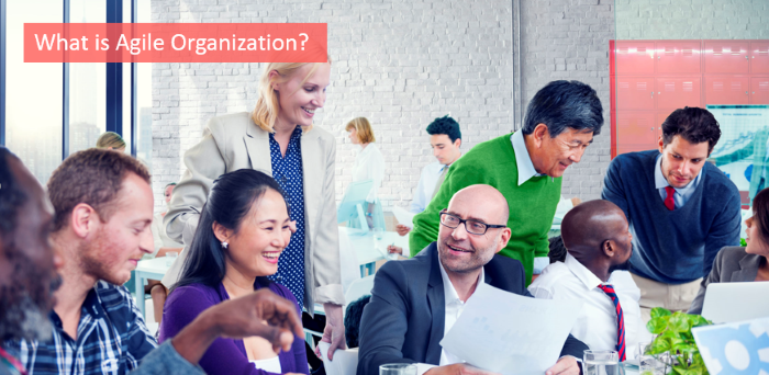 what is agile organization